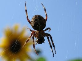 Comment nettoyer Araignée Droppings Off de Revêtements