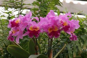 Comment prendre soin des fleurs hawaïennes