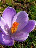 La pollinisation et la fécondation des fleurs