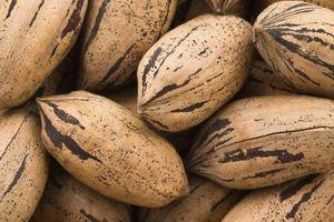 Comment Fertiliser un arbre de noix de pécan