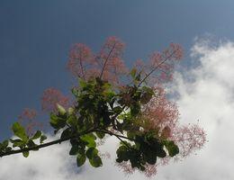 Qu'est-ce qu'un arbre de fumée?