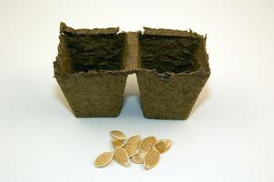 Comment cultiver des concombres cristal d'Apple extérieur