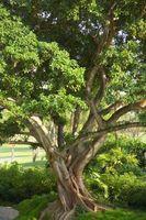 Instructions pour Plantation d'un arbre figure