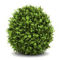Musique ne affectent la croissance des végétaux?