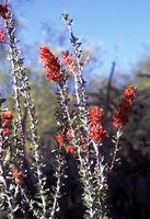 Comment avez des plantes du désert Adapté?