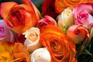 Fleurs qui sont teints avec colorant alimentaire