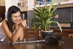 Que pourriez-vous faire pour augmenter la vigueur de vos plantes d'intérieur?