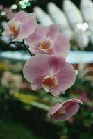 Orchidées & Fungi