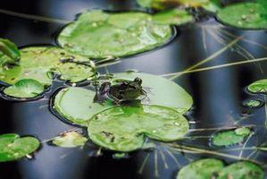 Comment prendre soin d'un étang alimenté par une source