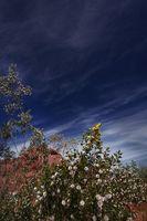 Les plus belles fleurs à avoir dans la chaleur de Phoenix, Arizona
