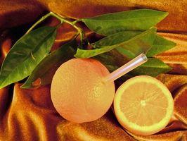 Orangers qui poussent dans les climats froids