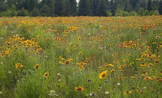Field Guide to Wild Flowers dans l'Ohio
