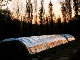 Comment cultiver Hothouse et légumes intérieur