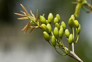 Les parties d'un calice dans une fleur