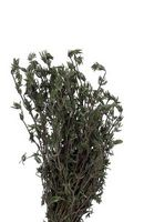 Jardinage hydroponique des herbes but lucratif