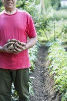 Comment cultiver des pommes de terre et pommes de terre mises en chantier