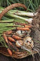 Exigences de sol pour les plantes potagères