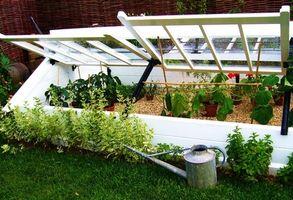 Cultiver des légumes d'hiver dans le Nord-