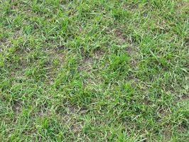 Que Weed & RSS doit être utilisé pour les pelouses Florida Winter?