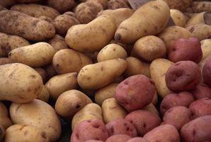 Les pommes de terre peuvent être cultivées en hydroponie?