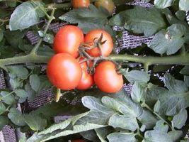 Comment faire un Hot Box pour Jardinage