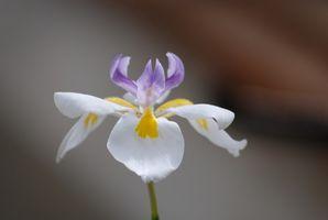 Comment chasser l'orchidée fantôme
