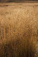 Quel type de plantes indigènes des Prairies devrais-je utiliser?