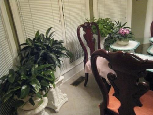 Les différents types de plantes Maison