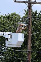 Comment protéger les arbres des services publics,