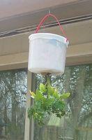 Comment planter des tomates Upside Down dans un panier suspendu