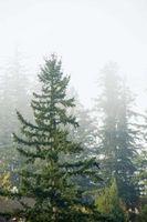 Comment transplanter les arbres à feuilles persistantes