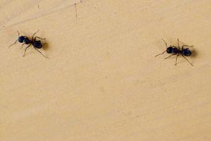 Comment lutter contre les insectes dans la maison avec des non-toxiques antiparasitaires