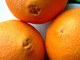 Ravageurs qui mangent les feuilles des arbres orange navel