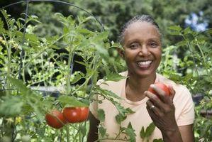 Quand planter des tomates dans le Nevada?