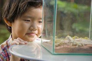 Comment faire pousser des plantes dans une cage Reptile