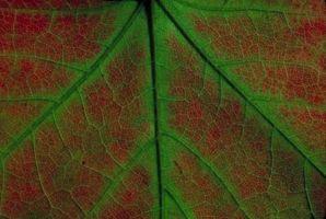 Pièces de cellule de base de plantes