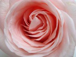 Faits intéressants au sujet Fleurs