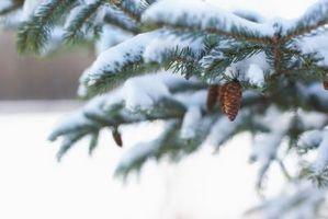 Plantes qui vivent dans les climats froids