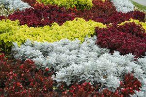 Idées pour faire parterres de fleurs