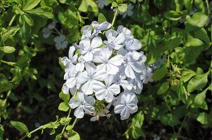 Sécheresse & Shade plantes tolérantes