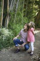 Bamboo est facile de tuer?