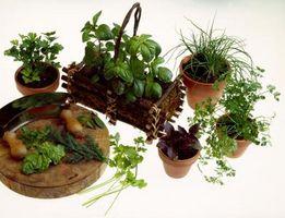 Comment faire pousser verticalement légumes intérieur