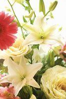 Importance des niveaux de pH pendant la floraison