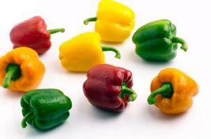 Quelle est la hauteur plantes sont Bell Pepper?