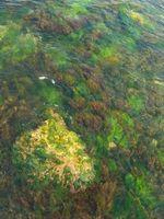 Comment faire pour effacer flottant algues