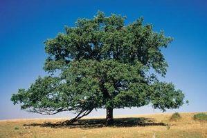 Que les arbres absorbent le dioxyde de carbone plus?