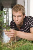 Quelles sont les causes feuilles sur les plantes d'intérieur à virer au noir?