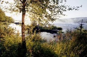 Quand planter rivière Birch arbres en Caroline du Nord