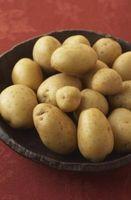 Comment cultiver une pomme de terre Yukon Gold Vine intérieur