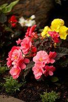 Une liste des Fleurs